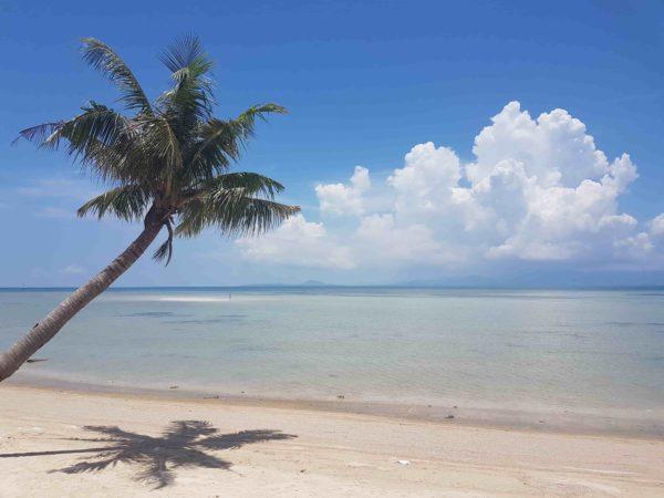 plage paradisiaque sur l'île de koh phangan thailande eau turquoise palmier soleil